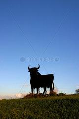 Typisch spanisch: immer wieder begegnet man dem Stier am Strassenrand.