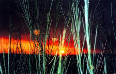 Zweige Abendhimmel