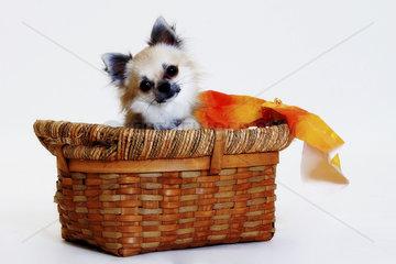 kleiner Hund im Koerbchen