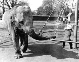Elefant Schaukel
