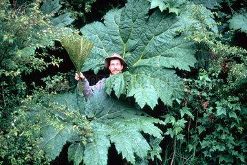 Mann im Blaetterwald