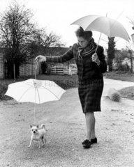 Huendchen mit Regenschirm