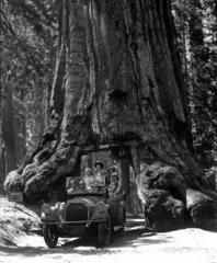 Autofahrt durch Baum
