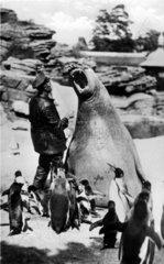 Robbe Waerter Pinguine