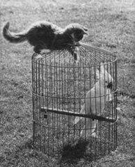 Vogel in Kaefig mit Katze
