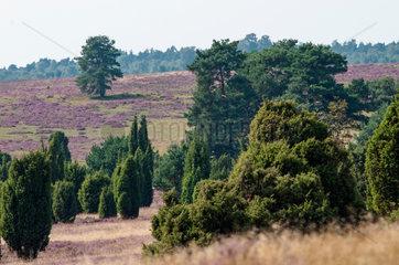 Bluehende Heide