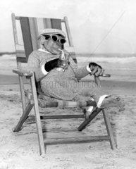Schimpanse Liegestuhl Strand Sonnenbrille