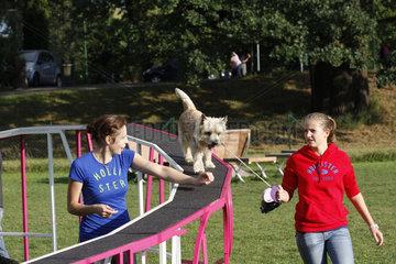 Documenta 13 Dog Run