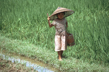 asiatisches Kind auf Reisfeld