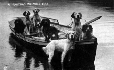 Jagdhunde im Boot