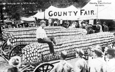 Riesenmaiskolben Markt