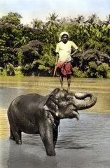 Mann auf Elefefant Strand