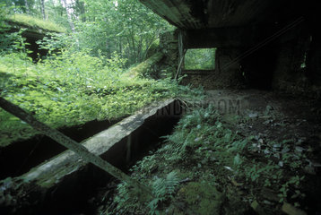 Bunkerruine der Wolfsschanze