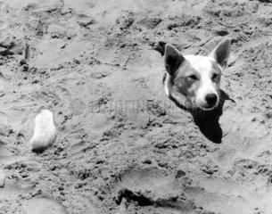 Hund im Sand begraben