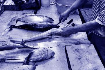 Fisch bearbeiten