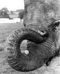 Maus am Elefantenbein