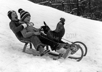 Kinder und Hahn fahren Schlitten
