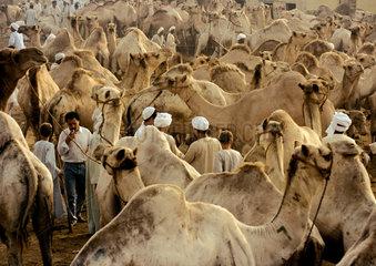 Kamelmarkt in Aegypten