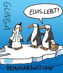 Reinkarnation von Elvis als Pinguin auf einer Eisscholle.