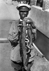 Afrikaner Schlangen
