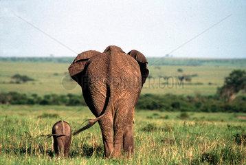Elefant mit Kind von hinten