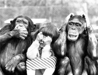 Zwei Affen mit Kind