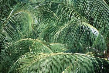 Palmenwedel gruen