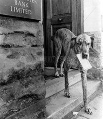 Hund traegt Brief im Maul