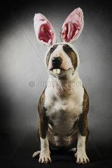 Hund als Hase verkleidet