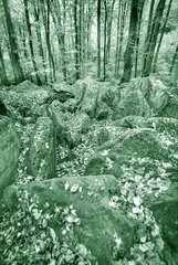 mit Blaettern bedeckte Steine im Wald