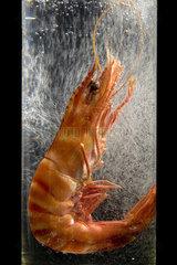 Krabbe in Wasserglas