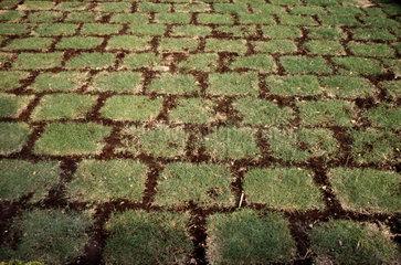 in Quadraten angeordneter Rasen
