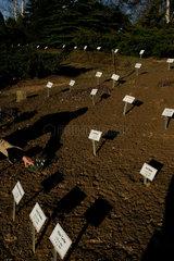 Graeber auf dem Friedhof in Lietzen