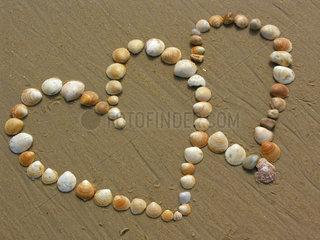 Herzfoermige Muscheln im Sand