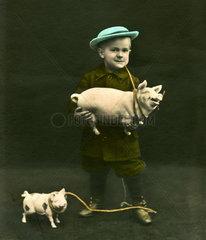Junge mit Schweinen