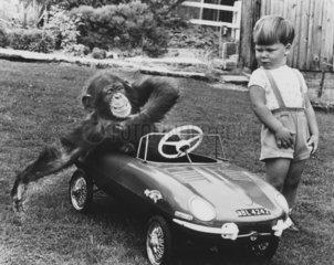 Schimpanse im Kinderauto
