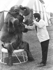 Elefant beim Arzt