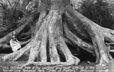 Maedchen steht neben Baumwurzeln - Oktopusbaum