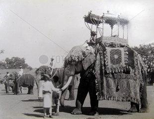 Indien  Kalkutta  Elefant  ca. 1880