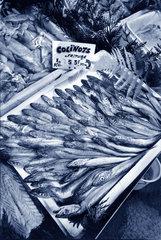 Fisch zum Verkaufen