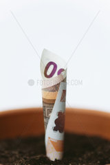 Fifty euro banknote planted in flower pot