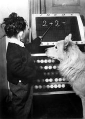 Hund lernt rechnen