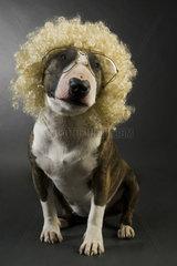 Hund mit Peruecke und Brille