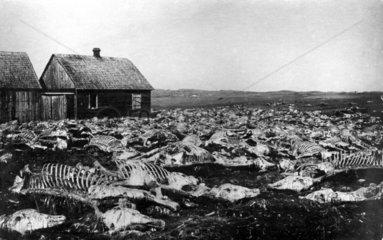 Feld voller Kadaver Skelette