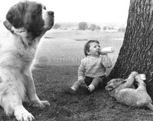Hund + Loewenbaby + Kind