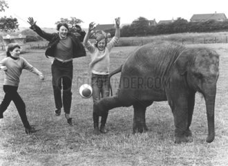 Fussballspiel mit Elefant