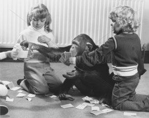 Schimpanse und Kinder spielen Karten