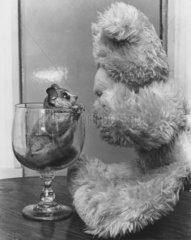 Nagetier + Stoffbaer  Glas