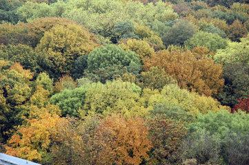 herbstlicher Wald von oben