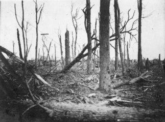 Erster Weltkrieg  Schlachtfeld  Ueberreste von Baeumen